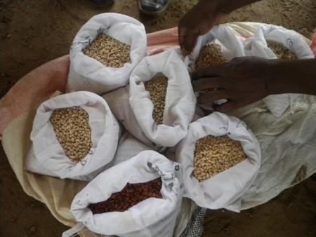 Différentes variétés de graines sèches provenant de l'INERA
